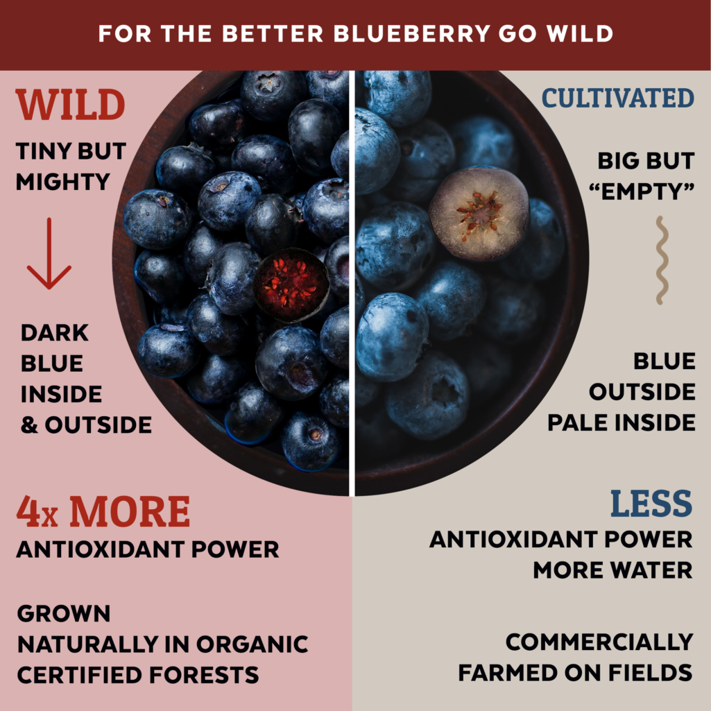 wild vs cultivated blueberries